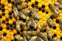 BeeKeeping Software Featured Image