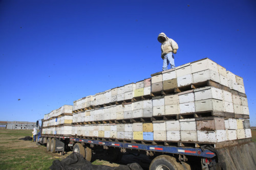 bee tech news now can show semi's haul bees online.