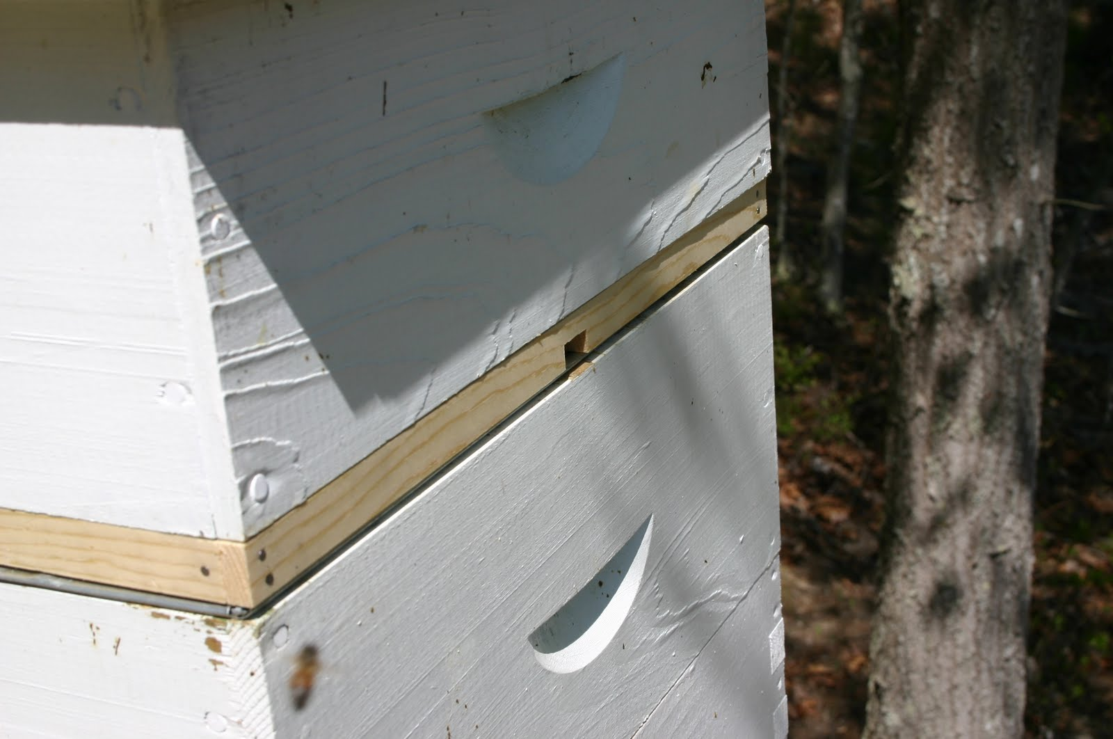 how to use beehive entrance reducer